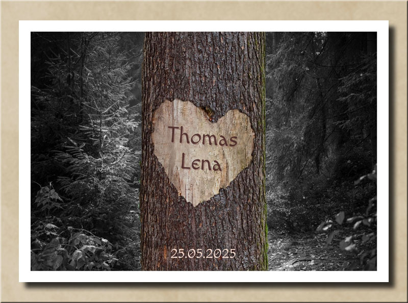 Herz der Liebe auf Baum im dunklen Tannenwald